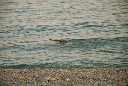nuotata serale