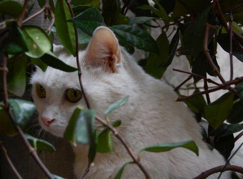 gatto di st-paul