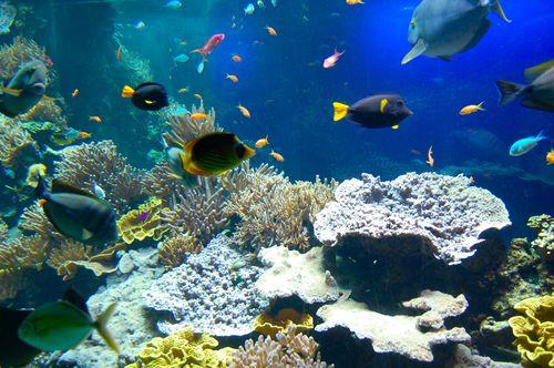 fra i coralli