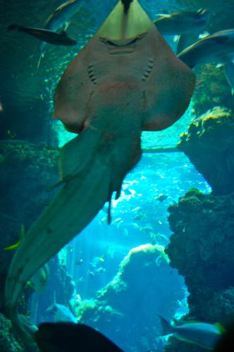 bacino degli squali