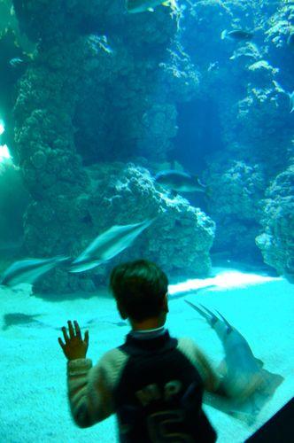 michele e gli squali