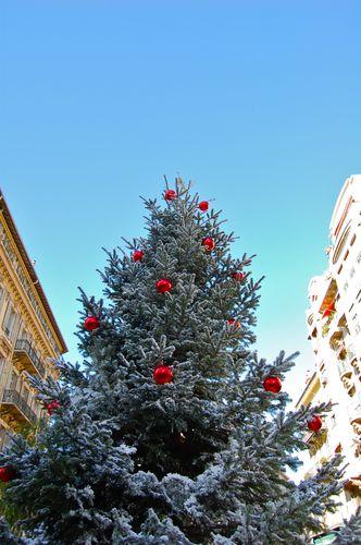 il primo albero di natale!!!