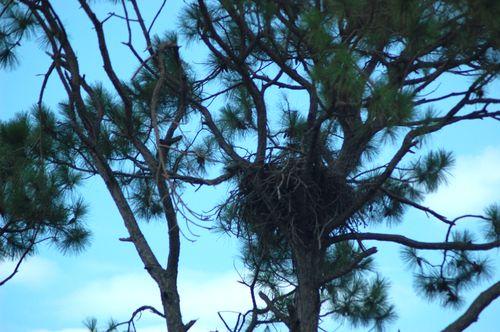 nido di aquila