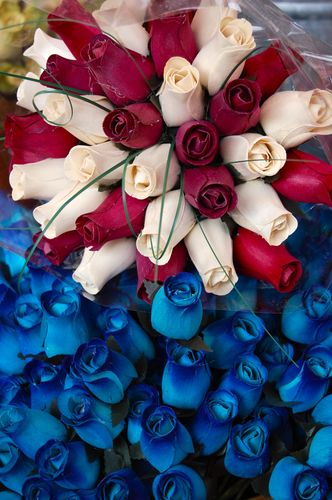 rose tricolori