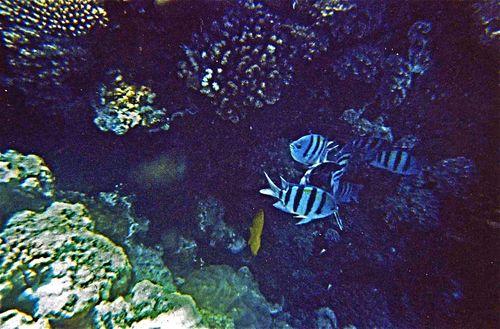 tra i coralli