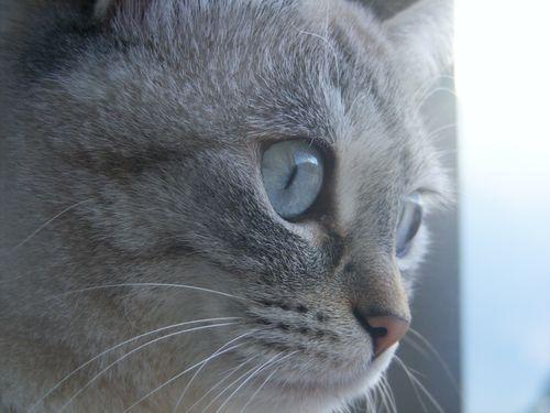 easy dagli occhi blu