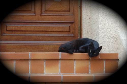cat-alano
