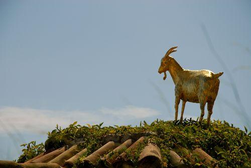 hôtel de la chèvre d'or