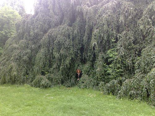 fuori dall'albero