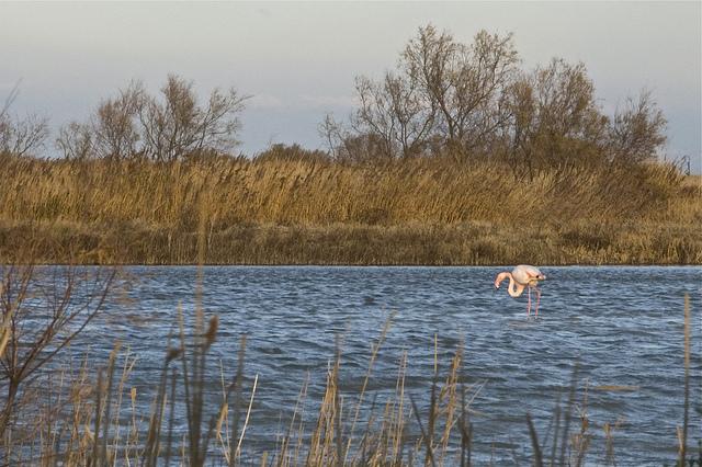 flamingo al tramonto