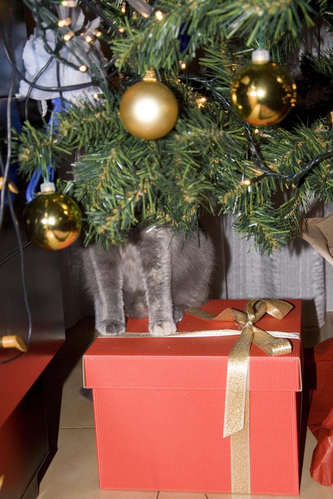 gatto-regalo
