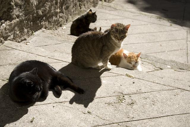 gatti d'entrevaux