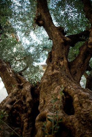 olivier de la liberté: portato dalla Spagna nel 1989, data dell'XI sec.