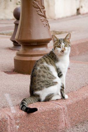 gatto della fraternità (primi anni del XXI sec.)